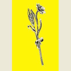 spiga con fiore